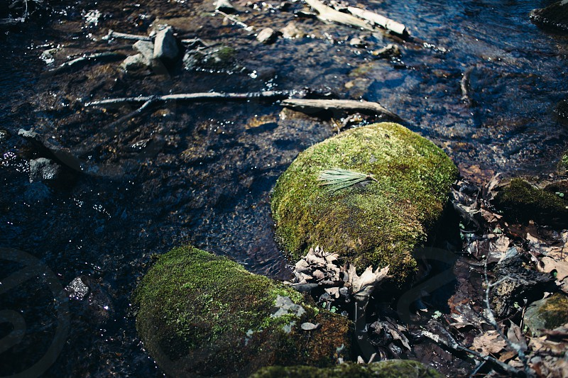 Mossy rocks in a winter runoff stream.  photo