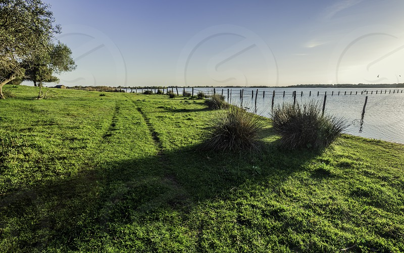 Traces of the wheels of the car on the shore of the lake cork oaks bushes and poles of wood in the water wit blue sky in background photo