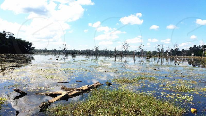 driftwood on mossy swamp photo