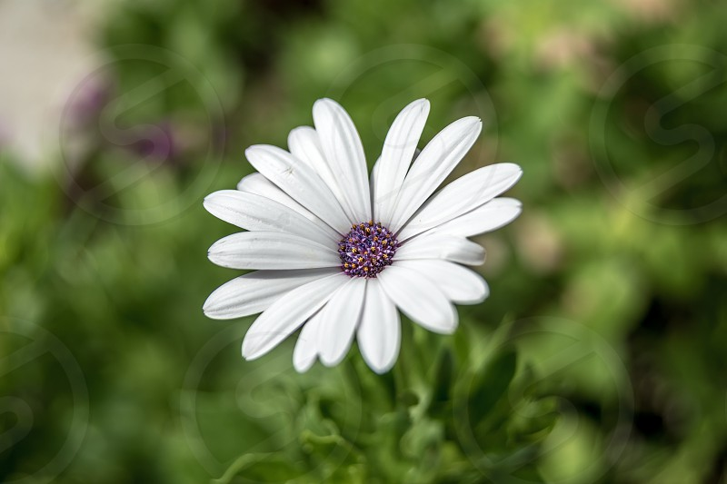 Wonderful flower in garden positive happy emotion cute white purple green bokeh photo