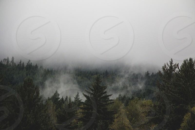 fog mist hurricane ridge mountain  pacific northwest adventure explore trees forest rain trees evergreen mysterious ominous majestic  photo