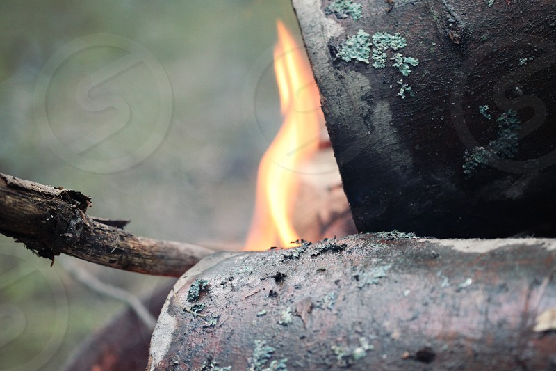 Logs and fire flame photo