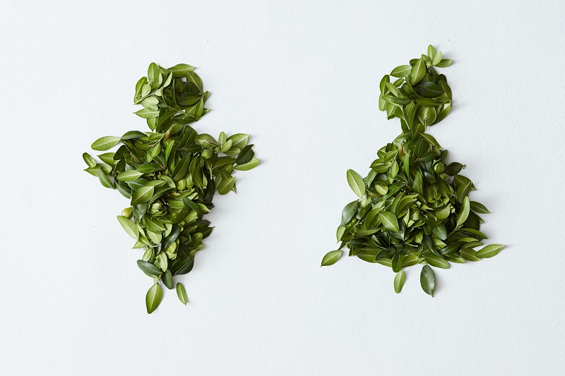 Male and female concept. Man and woman signs made of green leaves and represented over white background. photo