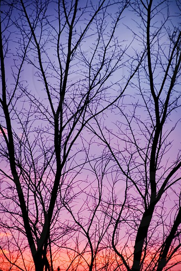 Sunset Tree Winter Summer Silhouette Pink Scapes Backgrounds Red Land Forest Nature Branch Multi Colored Dusk Season Yellow Orange photo