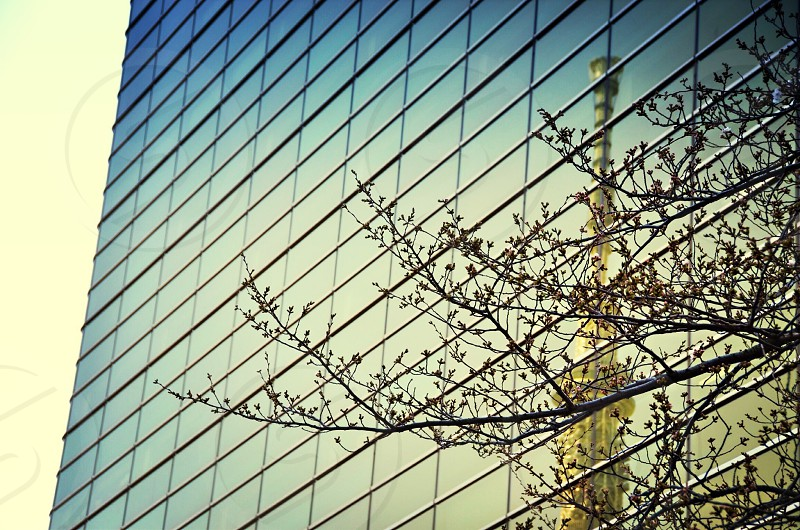 glass window building and a tree  photo