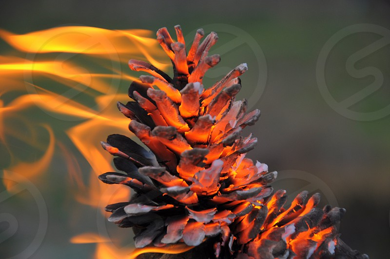 burning pinecone photo