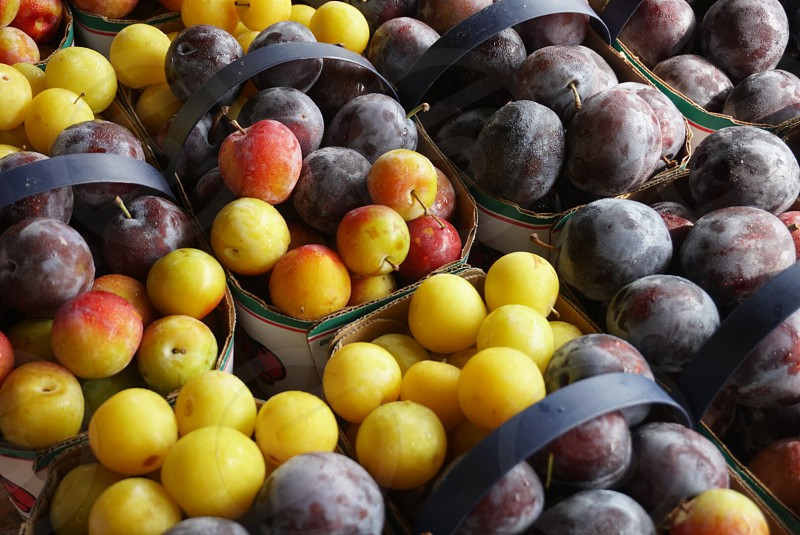 Circles fruits farmers market travel Canada plums  photo