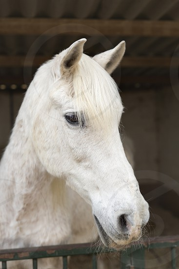 Face of a horse in a shelter in Rojales province of Alicante in Spain. photo