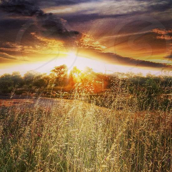 grassy sunset photo