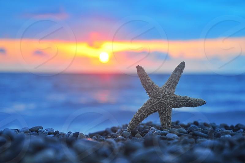 beige star fish on pebbles photo