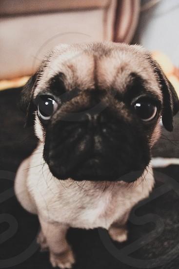 Pet portrait puppy dog photo