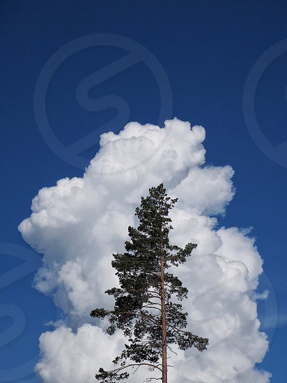tree in front of cumulus cloud photo