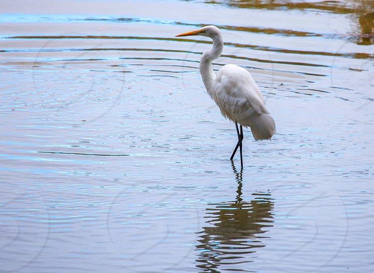 A heron strikes a thoughtful pose.  photo