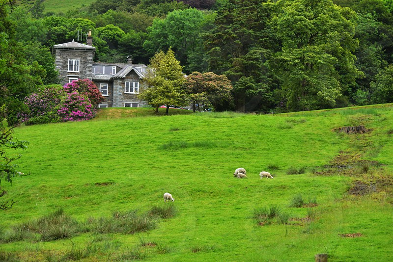 4 sheep on green grassy hill side during daytime photo