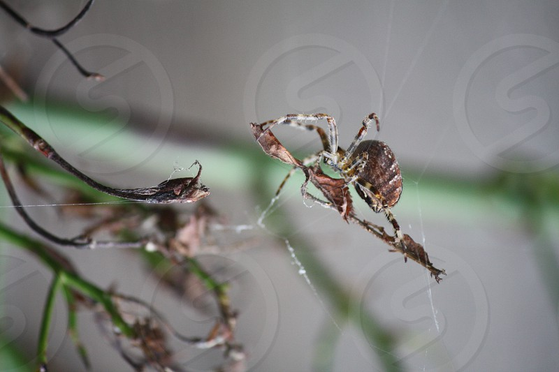 A spider decorating its web. photo