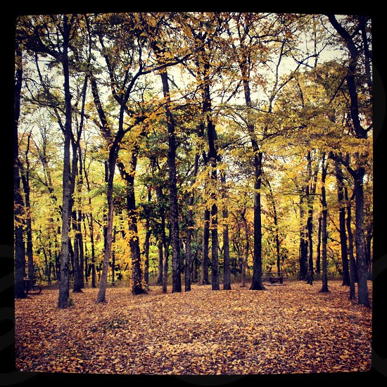 Forest in the fall photo