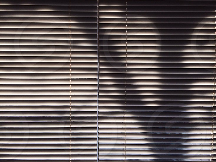 Platan silhouette on blinds photo