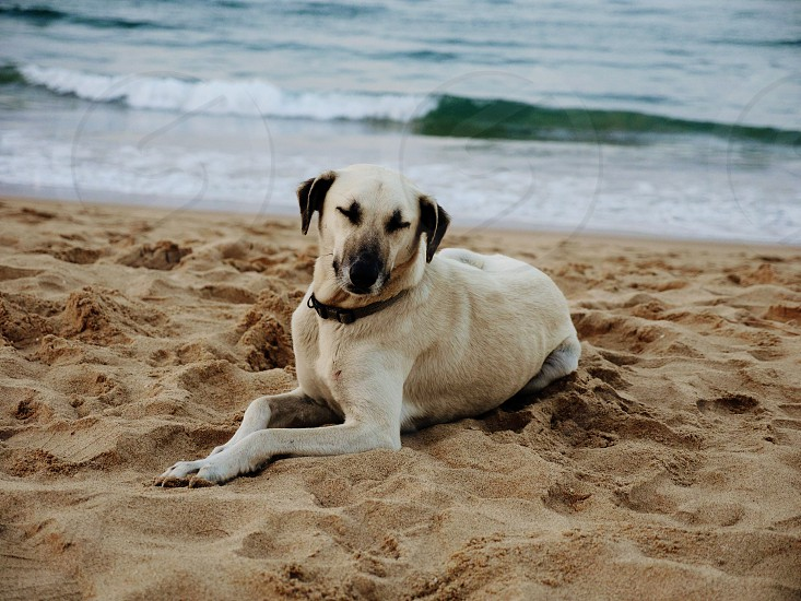 Cute dog lying on the beach photo