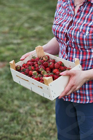 Woman holding container filled with fresh strawberries picked in home fruit garden. Candid people real moments authentic situations photo