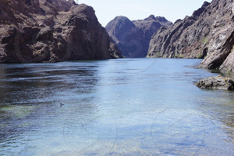 Bird Floating Down the Colorado River at Hoover Dam photo