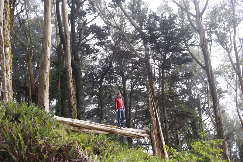 man standing on log in the middle of the forest photo photo