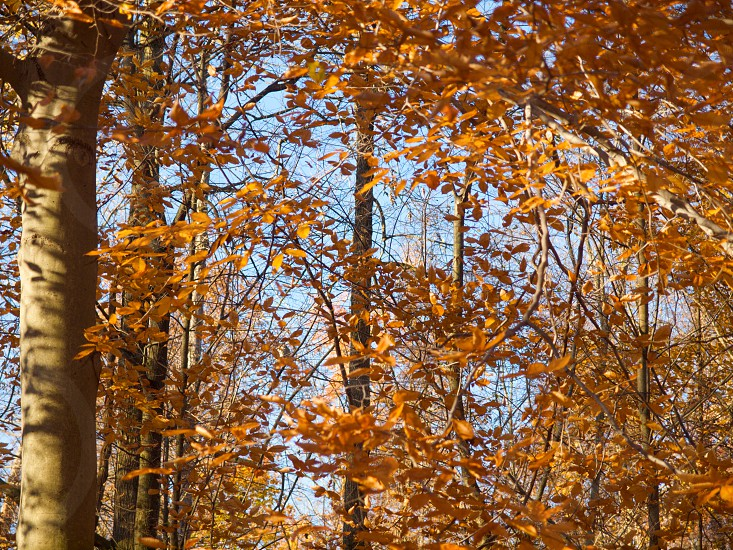 Autumn color. Fall. Orange leaves. Shadow and light. Negative space.  photo