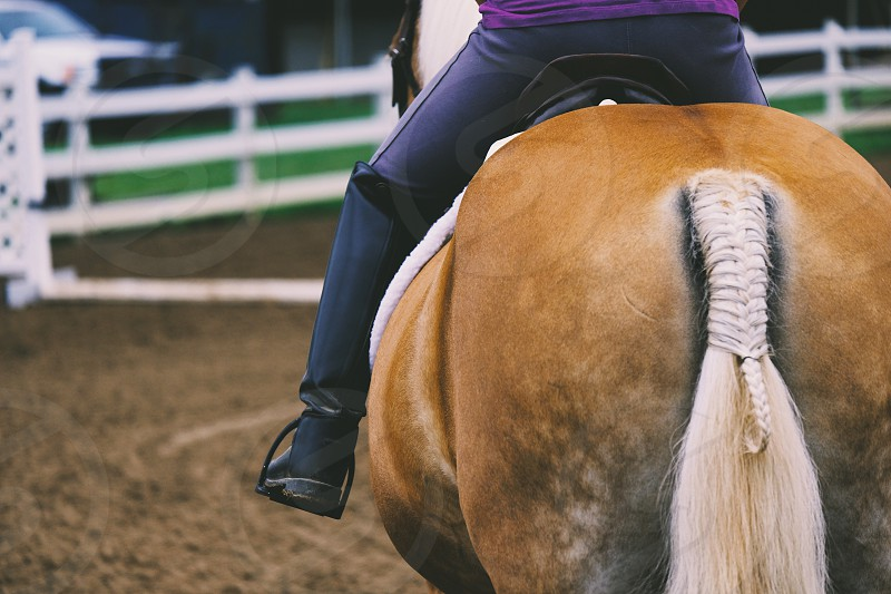 Girl riding horse in arena photo