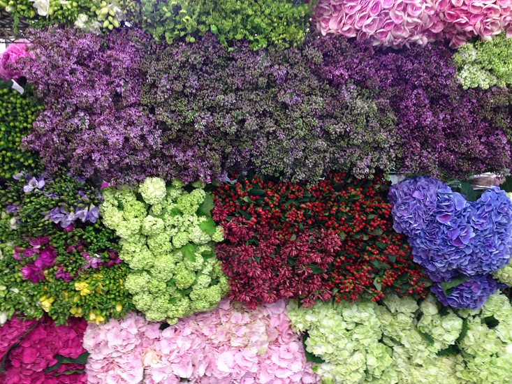 Wall of flowers bloom nature NYC flower market lilacs photo