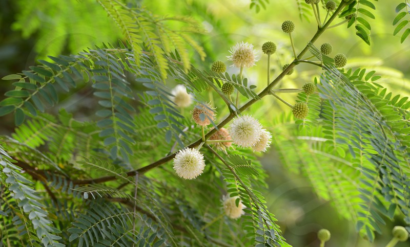 Nothing is better than the sight of Green Trees with flowers blooming. photo