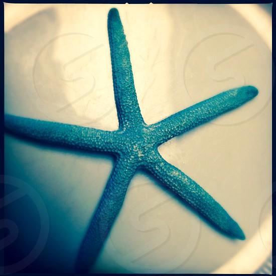 Starfish design - close up photo
