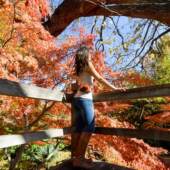 Girl in the fall tree tops  photo
