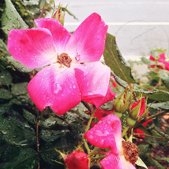 Flowers after rain. photo
