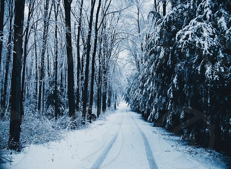 snow on the road next to leafless trees photo