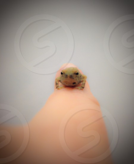 gray baby frog photo