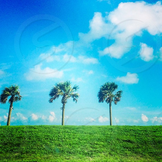 Corpus weather at Texas A&M University- Corpus Christi. Palm trees. Blue sky. Perfect.  photo