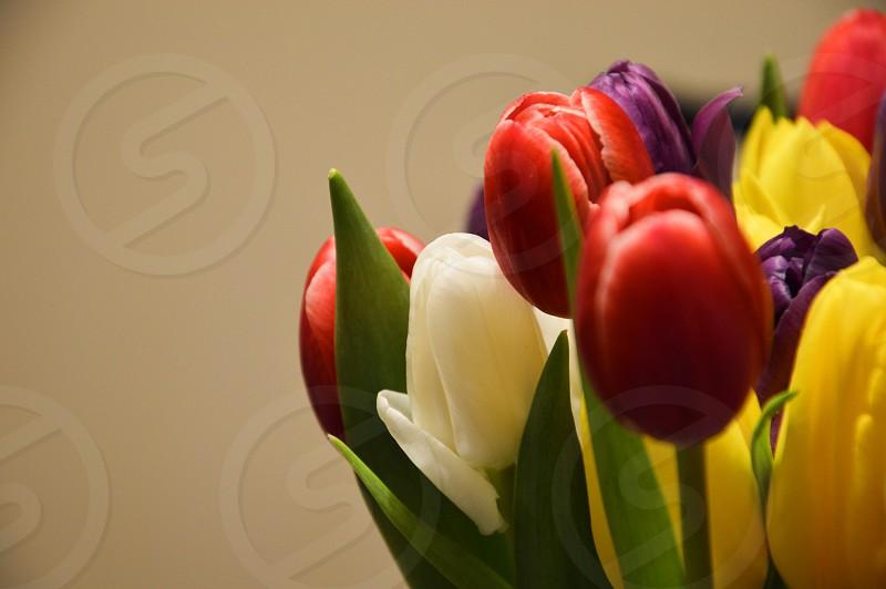 Bunch of tulips photo