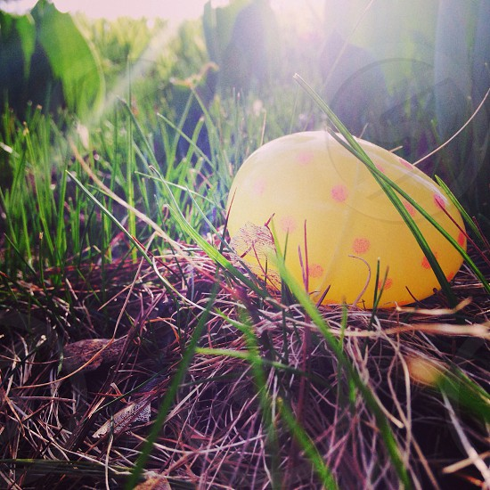 yellow egg on grass photo