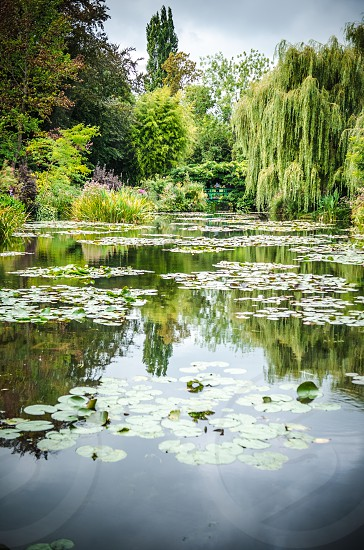 giverny france monet monet's garden at giverny reflections lake willow tree trees garden lily pads photo