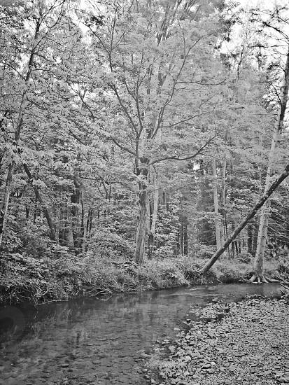 Fallen tree over running water photo