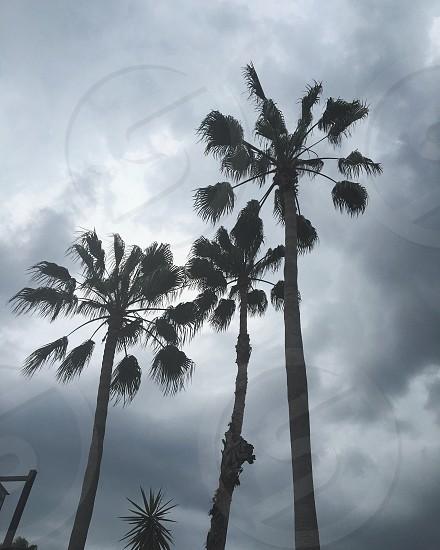 Palm trees rain clouds Sky Florida  photo