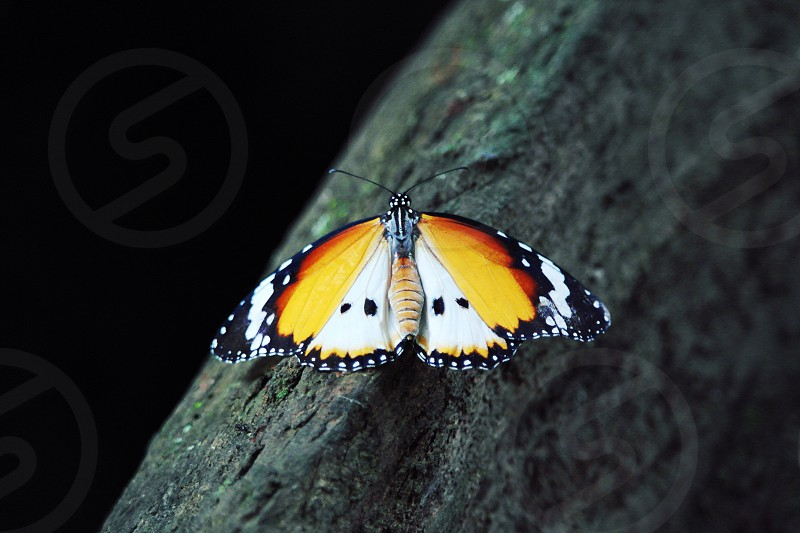 white brown yellow and black moth on grey wooden surface with black background in focus photography photo