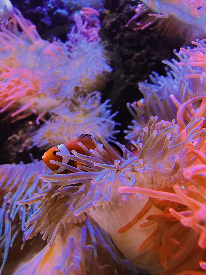 under the sea photo