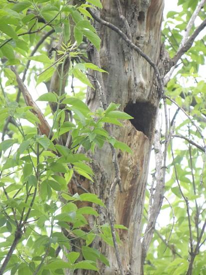 Woodpecker Was Here photo