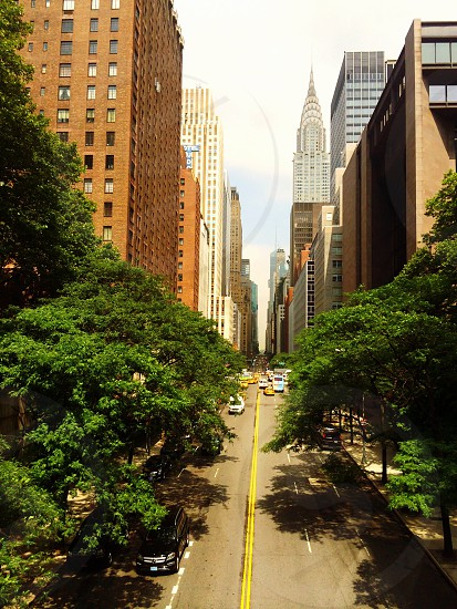 tree lined street with brick buildings photo