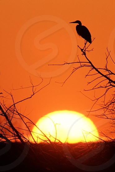 wildlife birds blue heron heron sunrise hope inspiration reflection calm orange yellow sun perch perching watching restful colorado usa photo