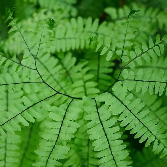 Green; flora; ferns; plants; nature photo