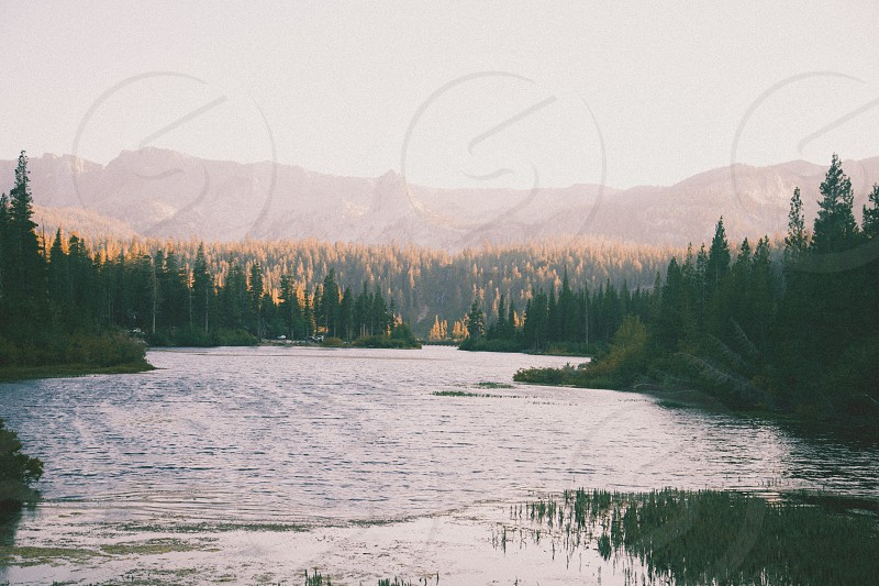 body of water beside green forest photo