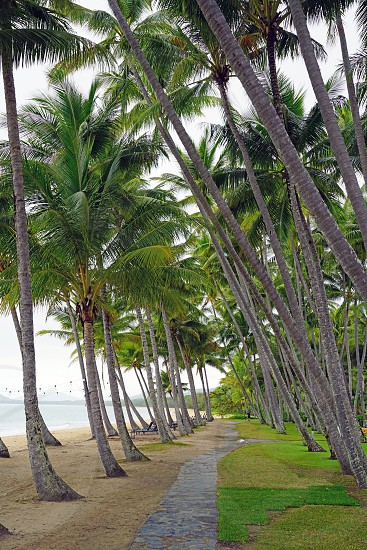 Palm Cove Cairns - Queensland photo