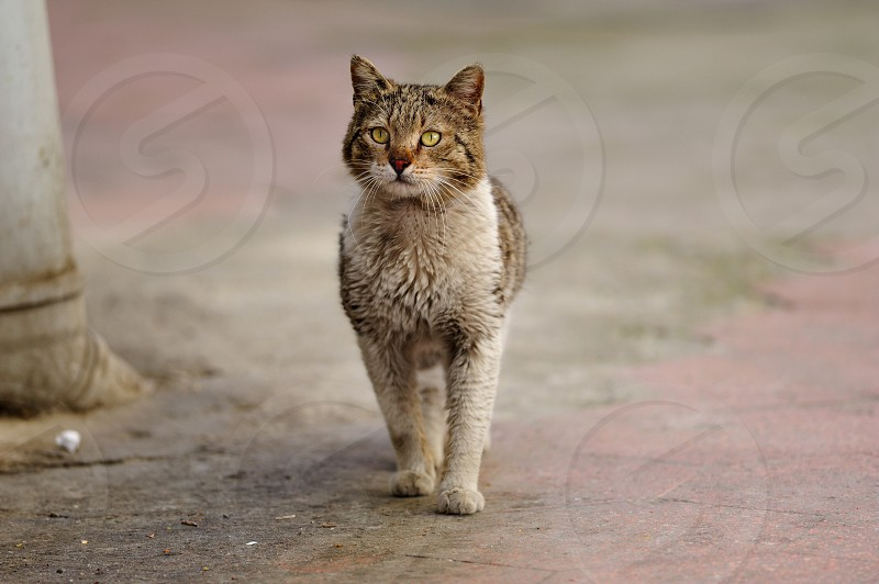 Stray Cat from İstanbul photo