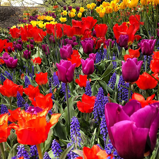 Spring flowers in Central Park photo
